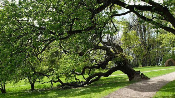 Bildet kan inneholde: tre, branch, natur, woody plante, anlegg.