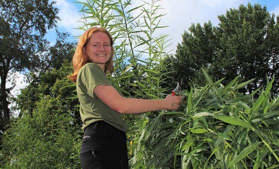 Helene Finseth er en av ti sesongansatte gartnere i Botanisk hage.