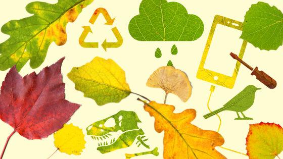 Bildet kan inneholde: blad, drue blader, plantepatologi, tre, anlegg.