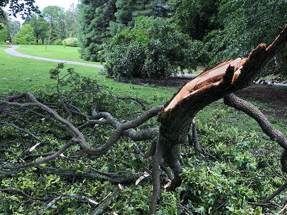 Bildet kan inneholde: tre, vegetasjon, branch, anlegg, stamme.