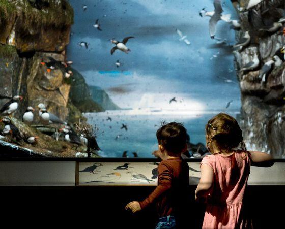 To barn ser på utstilling med fugler.