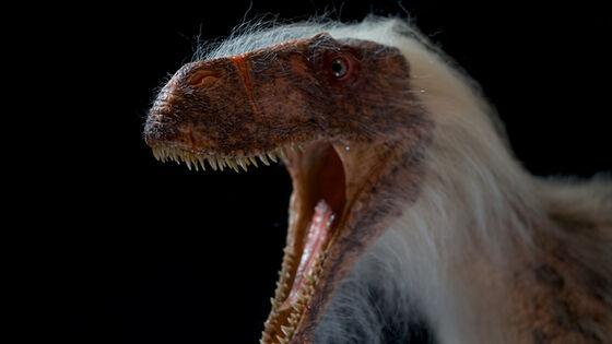 Bildet kan inneholde: menneskekroppen, nebb, iris, fugl, terrestrisk dyr.